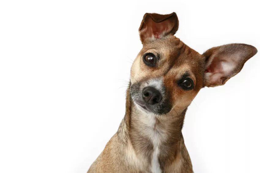 O poste e o cachorro